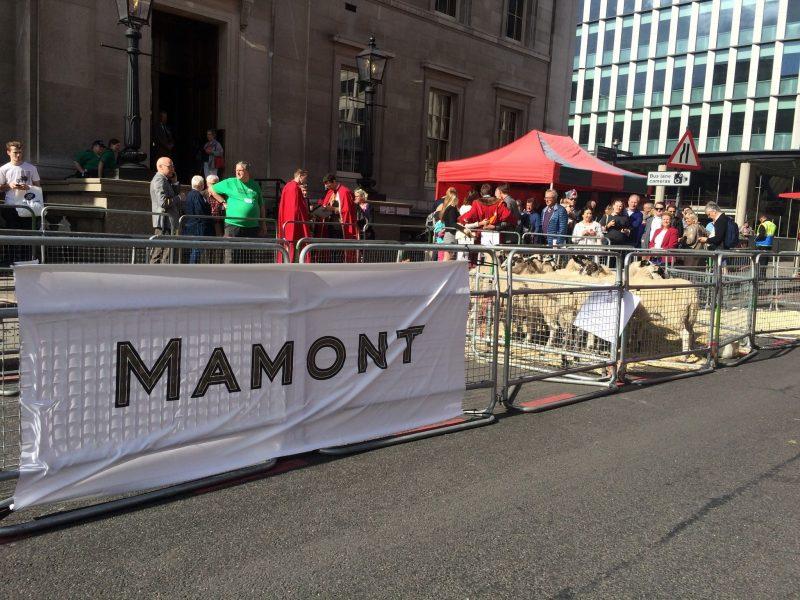 mamont-banner-2016