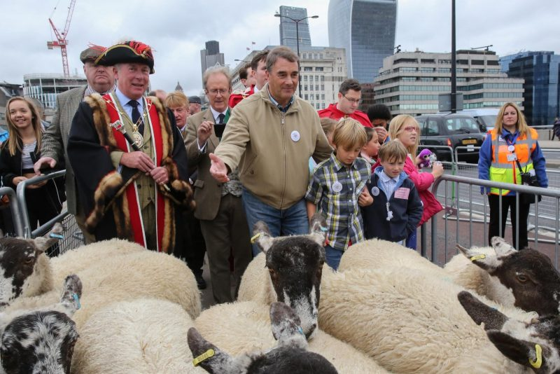Nigel Mansell - Sheep Drive 2016